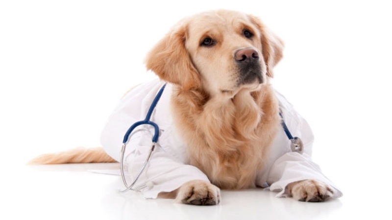 Dog health Tips