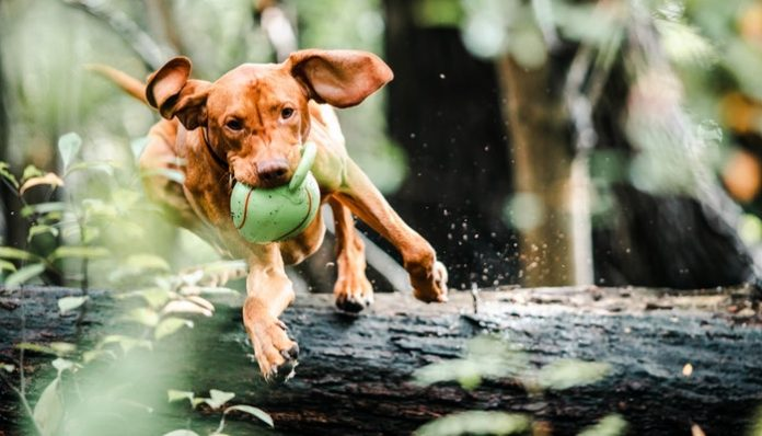 Pet Toy Chewable and Safe for Your Dog