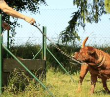 How to become a dog trainer – Making a career out of dog training