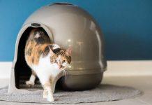 Best Cat Litter Solution