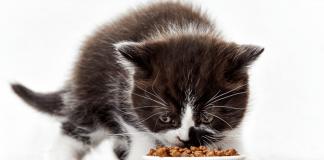 Cat Right Food