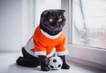 Clothing Your Cat