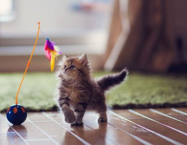 Best Selling Cat Toys