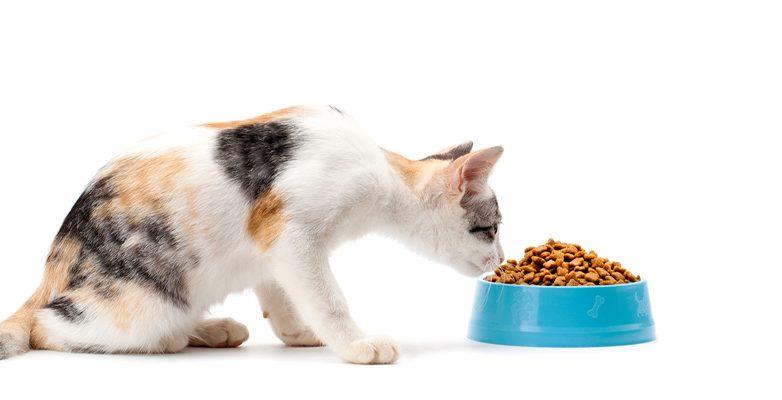 Cat Food Accessories
