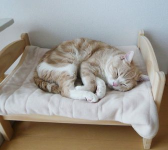 best type of cat bed