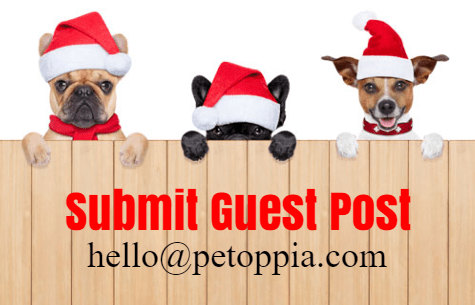 Submit Pet Guest Post | Pet Care Blog +
