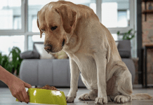 Foods To Avoid For A Healthier Dog