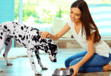 Healthy Dog Tips