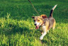 Beloved Dog Healthy