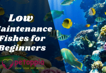 Low Maintenance Fishes for Beginners