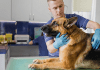 Dog Health Problems and Solutions