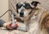 Dog Med Laser