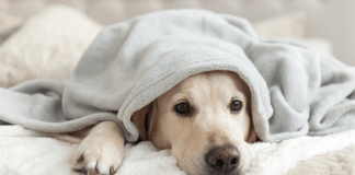 Pets During a Pandemic