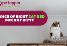 Choice of Right Cat Bed for Any Kitty