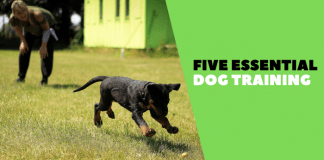 Five essential dog training