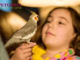 Friendly Bird Species