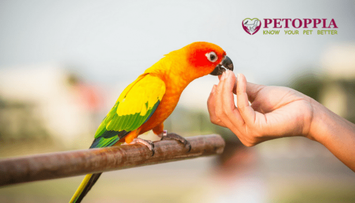 Pet Birds Make Fitting Companions