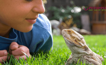 Reptiles a Good Pet for Kids