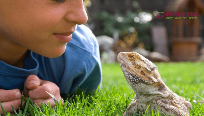 Reptiles a Good Pet for Kids