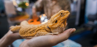 Tips for New Reptile Owners