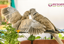 Best Pet Birds