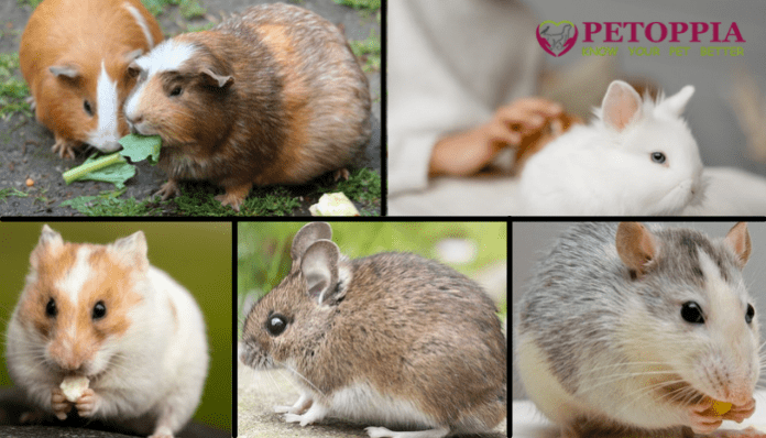 Best Small Pets for Your Child