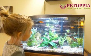 Aquarium For Your Kid