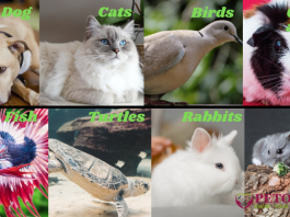 Eight Best Pets For Your Home