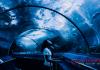 Maintenance Of Your Aquarium