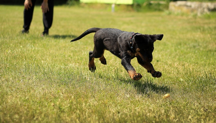Training Methods for Your Pet